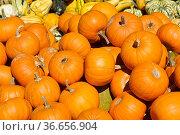 Kuerbis   Pumpkin, Стоковое фото, фотограф Zoonar.com/Günter Lenz / age Fotostock / Фотобанк Лори
