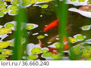 Gartenteich mit Schaum, oberfläche, Wasserfläche. Стоковое фото, фотограф Zoonar.com/Bildagentur Geduldig / easy Fotostock / Фотобанк Лори