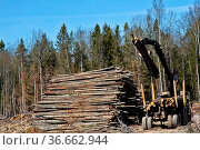 Forest industry. Operations for loading-unloading logging truck at... Стоковое фото, фотограф Zoonar.com/Maximilian Buzun / easy Fotostock / Фотобанк Лори