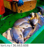Abfischen - to fish dry 12. Стоковое фото, фотограф Zoonar.com/Liane Matrisch / easy Fotostock / Фотобанк Лори