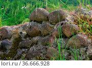 Natursteinmauer - natural stone wall 01. Стоковое фото, фотограф Zoonar.com/LIANEM / easy Fotostock / Фотобанк Лори