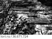 Brennholzstapel im Wald, pile of firewood in forest. Стоковое фото, фотограф Zoonar.com/Jens Schmitz / easy Fotostock / Фотобанк Лори