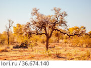 Outback landscape and beautiful ancient tree in the Northern Territory... Стоковое фото, фотограф Zoonar.com/Chris Putnam / easy Fotostock / Фотобанк Лори