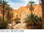 View of mountain oasis Chebika, Sahara desert, Tunisia, Africa. Стоковое фото, фотограф Zoonar.com/Dasha Petrenko / easy Fotostock / Фотобанк Лори