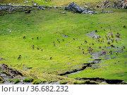 Fuente De in the in mountains of Picos de Europa, Cantabria, Spain... Стоковое фото, фотограф Zoonar.com/Rudolf Ernst / age Fotostock / Фотобанк Лори