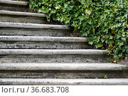 Steintreppe. Стоковое фото, фотограф Zoonar.com/Martina Berg / easy Fotostock / Фотобанк Лори