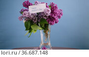 Bouquet of different blooming spring lilacs in a vase on blue background. Стоковое видео, видеограф Peredniankina / Фотобанк Лори