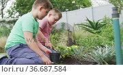 Happy caucasian boy with his brother gardening together in garden. Стоковое видео, агентство Wavebreak Media / Фотобанк Лори