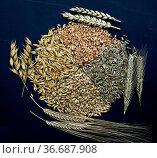 Getreidesorten, Getreide, Getreidekoerner, Стоковое фото, фотограф Zoonar.com/Manfred Ruckszio / age Fotostock / Фотобанк Лори