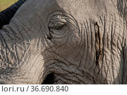 Particular close-up of the skin of an elephant. Стоковое фото, фотограф Zoonar.com/Lotti Fabio / easy Fotostock / Фотобанк Лори