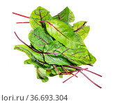Heap of fresh leaves of green Chard leafy vegetable (mangold, beet... Стоковое фото, фотограф Zoonar.com/Valery Voennyy / easy Fotostock / Фотобанк Лори