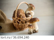 heap of fresh harvested forest mushrooms in basket. Стоковое фото, фотограф Peredniankina / Фотобанк Лори