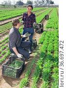 Hispanic female farmer discussing to worker on field. Стоковое фото, фотограф Яков Филимонов / Фотобанк Лори