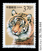 CHINA - CIRCA 2000: A stamp printed in China shows Panthera tigris... Стоковое фото, фотограф Zoonar.com/BBBAR / age Fotostock / Фотобанк Лори