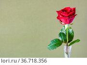 Horizontal still-life with copyspace - single fresh red rose flower... Стоковое фото, фотограф Zoonar.com/Valery Voennyy / easy Fotostock / Фотобанк Лори