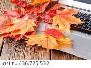 Autumn time to change job. Стоковое фото, фотограф Zoonar.com/Photographer: Andrey N.Cherkasov / easy Fotostock / Фотобанк Лори