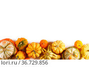 Assortiment of autumn harvested pumpkins in a heap isolated on white... Стоковое фото, фотограф Zoonar.com/Ivan Mikhaylov / easy Fotostock / Фотобанк Лори