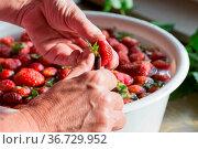 Erdbeermarmelade Kochen vorbereitung Erdbeeren Waschen. Стоковое фото, фотограф Zoonar.com/WSF / easy Fotostock / Фотобанк Лори