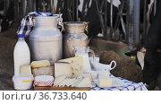 Various types of fresh natural farm dairy products on table on background of open cowshed. Стоковое видео, видеограф Яков Филимонов / Фотобанк Лори