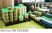 Large assortment of pickled olives in plastic buckets and jars stacked on pallets on artisanal pickles factory. Стоковое видео, видеограф Яков Филимонов / Фотобанк Лори