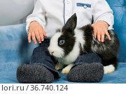 Little boy hugging a furry rabbit, sitting in the armchair. Стоковое фото, фотограф Zoonar.com/Konstantin Malkov / easy Fotostock / Фотобанк Лори