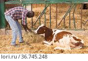 Positive african american man farmer feeds cows with hay. Стоковое фото, фотограф Яков Филимонов / Фотобанк Лори