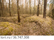 Old Abandoned World War II Trenches In Forest Since Second World War... Стоковое фото, фотограф Ryhor Bruyeu / easy Fotostock / Фотобанк Лори
