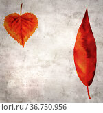 stylish textured old paper background with autumnal leaves in color ink. Стоковая иллюстрация, иллюстратор Tamara Kulikova / Фотобанк Лори