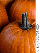 Whole orange pumpkins. Стоковое фото, фотограф Иван Михайлов / Фотобанк Лори