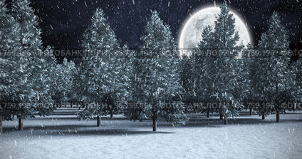 Image of snow falling over winter night landscape with fir trees