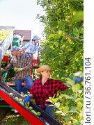 Three workers harvesting apples in plantation. Стоковое фото, фотограф Яков Филимонов / Фотобанк Лори