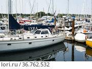 Marina in Victoria, British Columbia, Canada. Стоковое фото, фотограф Douglas Williams / age Fotostock / Фотобанк Лори