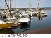 Oak Bay Marina near Victoria, British Columbia, Canada. Стоковое фото, фотограф Douglas Williams / age Fotostock / Фотобанк Лори