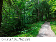 Waldweg-Höhenrainweg in Grainau Kreis Garmisch-Partenkirchen. Стоковое фото, фотограф Zoonar.com/Thomas Riess / age Fotostock / Фотобанк Лори
