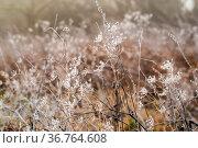 Erster Frost frühmorgens an den Mainwiesen in Hessen. Стоковое фото, фотограф Zoonar.com/THOMAS RIESS / age Fotostock / Фотобанк Лори