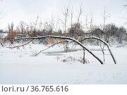 Winter landscape with two bent trees on foreground. Стоковое фото, фотограф Zoonar.com/Yury Zaparozhchanka / easy Fotostock / Фотобанк Лори