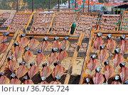 Stockfisch - Stockfish 02. Стоковое фото, фотограф Zoonar.com/Liane Matrisch / easy Fotostock / Фотобанк Лори