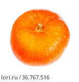Ripe orange pumpkin head isolated on white background. Стоковое фото, фотограф Zoonar.com/Valery Voennyy / easy Fotostock / Фотобанк Лори