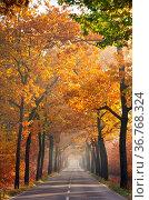 Allee im Herbst - avenue in fall 24. Стоковое фото, фотограф Zoonar.com/LIANEM / easy Fotostock / Фотобанк Лори