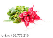 Bunch of fresh organic red radish with greens isolated on white background... Стоковое фото, фотограф Zoonar.com/Valery Voennyy / easy Fotostock / Фотобанк Лори