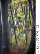 Herbstwald, Mischwald, Bayern, Deutschland| Autumnally forest, Bavaria... Стоковое фото, фотограф Zoonar.com/Günter Lenz / age Fotostock / Фотобанк Лори