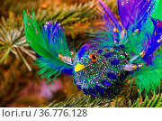 Ziervogel - ornamental bird 01. Стоковое фото, фотограф Zoonar.com/Liane Matrisch / easy Fotostock / Фотобанк Лори