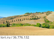 Zypressenkurve im Herbst - cypress curve in fall 13. Стоковое фото, фотограф Zoonar.com/Liane Matrisch / easy Fotostock / Фотобанк Лори