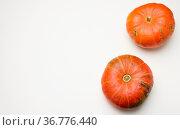 Round ripe orange pumpkins on white background, top view, copy space. Стоковое фото, фотограф Zoonar.com/DANK0 NN / easy Fotostock / Фотобанк Лори