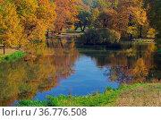 Eiche im Herbst - Oak tree in fall 06. Стоковое фото, фотограф Zoonar.com/LIANEM / easy Fotostock / Фотобанк Лори