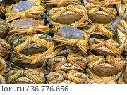 Bunch of Live Crabs at Farmers Market. Стоковое фото, фотограф Zoonar.com/Marko Beric / easy Fotostock / Фотобанк Лори