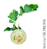 Fresh kohlrabi with green foliage isolated on white background. Стоковое фото, фотограф Zoonar.com/Valery Voennyy / easy Fotostock / Фотобанк Лори