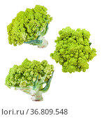 Several romanesco broccoli heads isolated on white background. Стоковое фото, фотограф Zoonar.com/Valery Voennyy / easy Fotostock / Фотобанк Лори