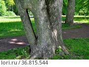 Herrenkrugpark, Nordpark in Magdeburg, Стоковое фото, фотограф Zoonar.com/Bildagentur Geduldig / easy Fotostock / Фотобанк Лори
