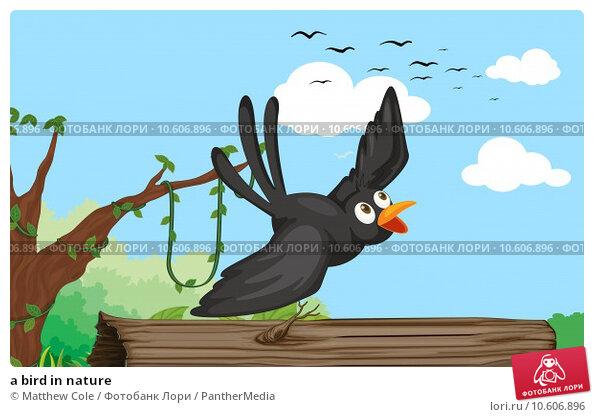 a bird in nature. Стоковая иллюстрация, иллюстратор Matthew Cole / PantherMedia / Фотобанк Лори